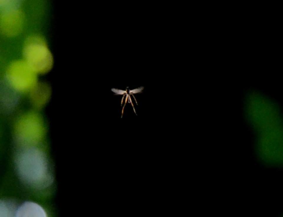 Ангел. Фото Вениамина Зайцева